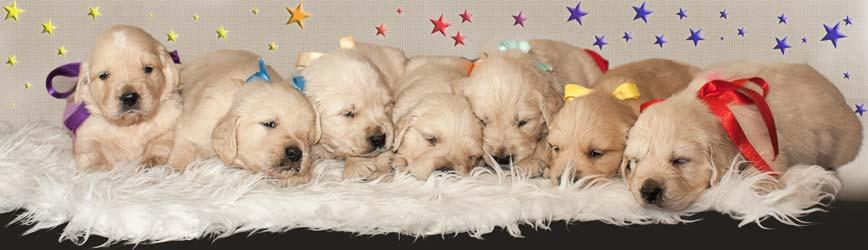 Ioana's Dogs